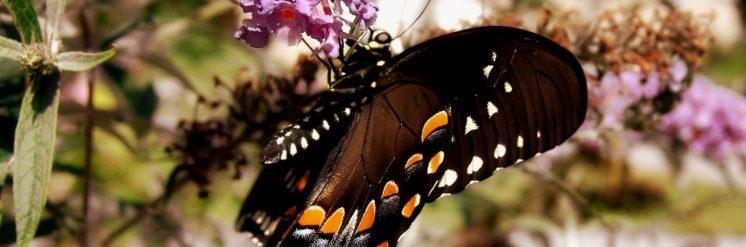cropped-dsc05866-butterfly-and-bush-3.jpg