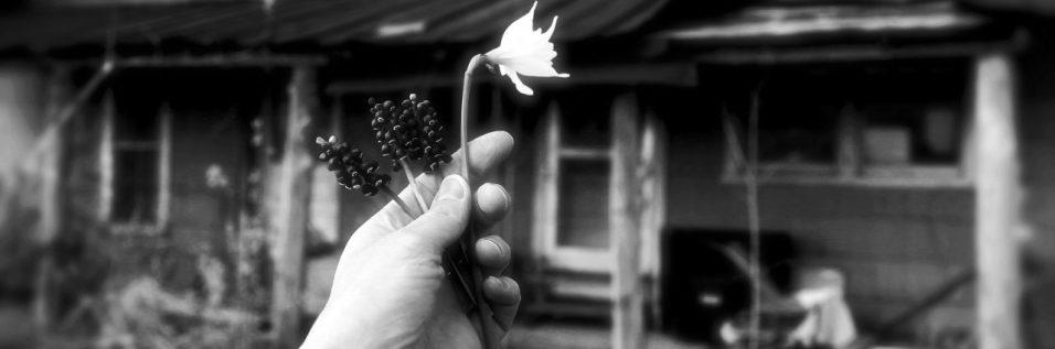 cropped-img_0834-spring-flowers-2.jpg