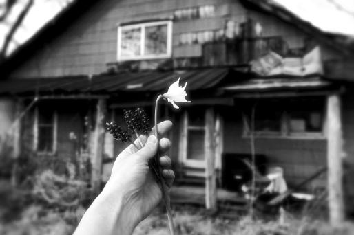 IMG_0834 Spring Flowers 2