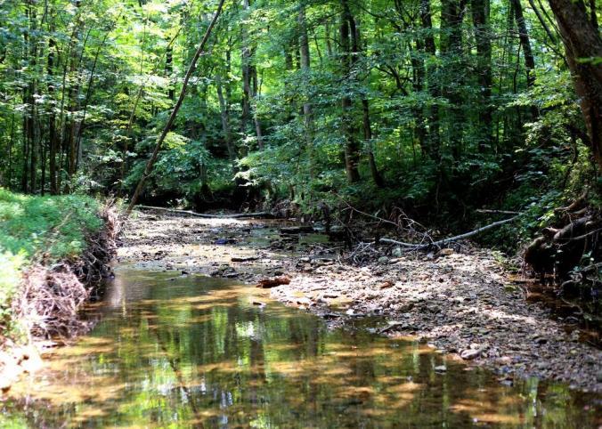 IMG_1423 summer creek 2.jpg