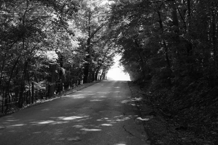 IMG_1446 tree road c.jpg