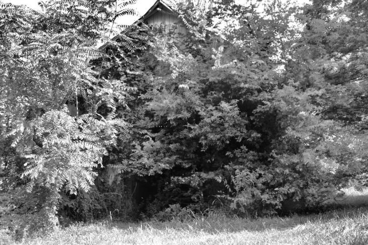 IMG_1450 Barn gone to the trees c.jpg
