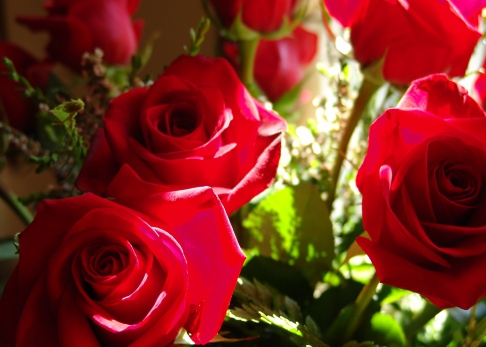 DSC04165 Roses